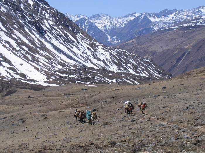 Jhomolhari Trek 137 Bhutan