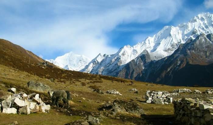 Yala Peak Climb (5732m)- 15 days