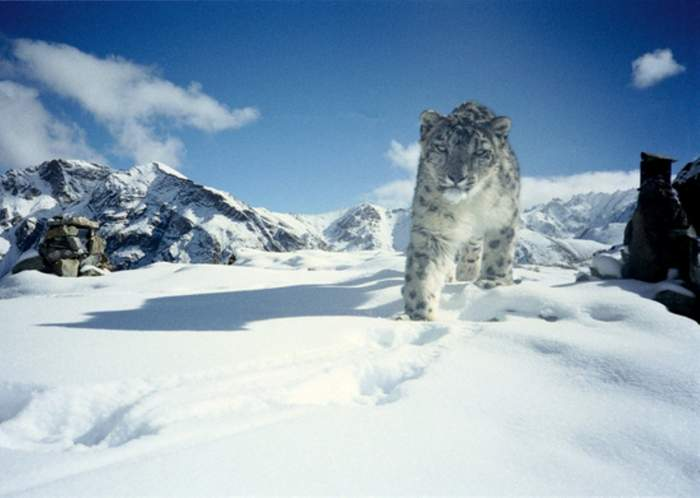 Snow leopard trek in Hemis National Park – 15 days